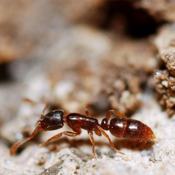 Ant Exterminator NYC