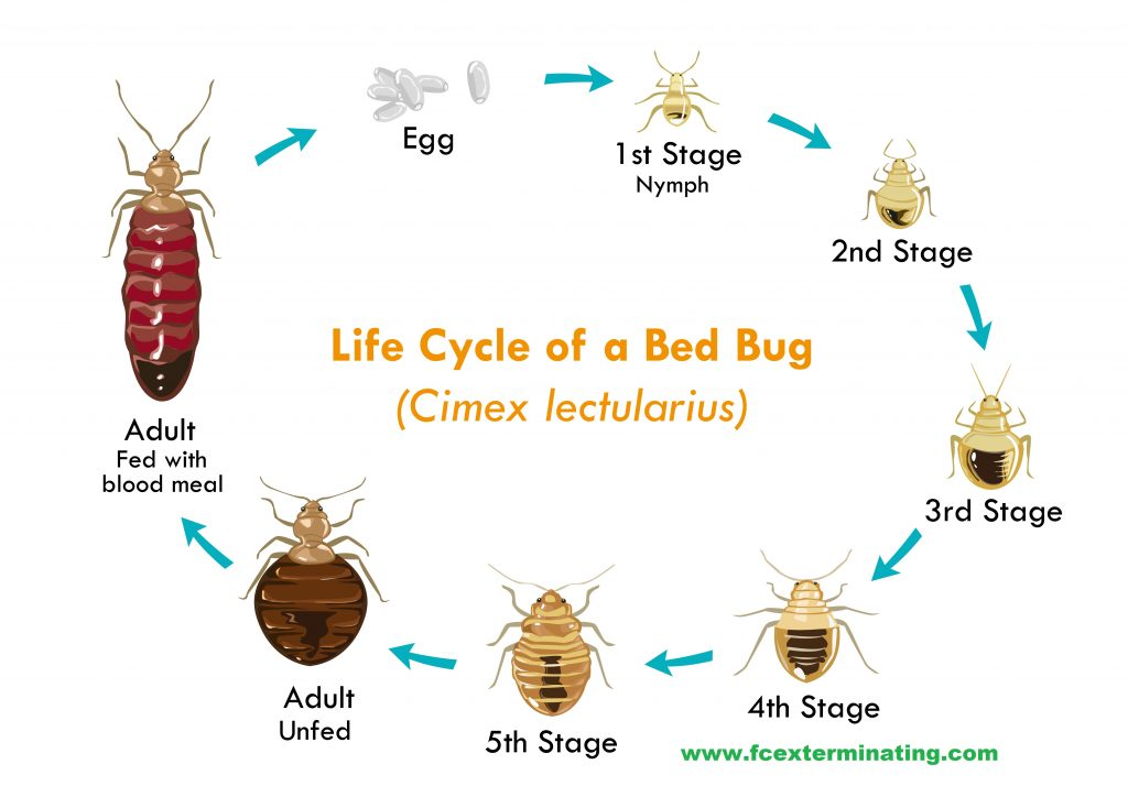 bug professional choose bed extermination bedbug treatment removal aaa why edmonton pest exterminator exterminators for