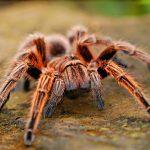 Spider Control