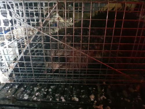 Raccoon Removal Staten Island